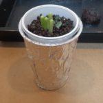 簡単!水耕栽培容器の作り方