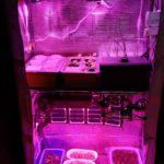 室内で水耕栽培してまして、強力なLEDライトを追加しました