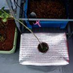 【水耕栽培】ダッシュでオーバーフロー式を組み立てた。