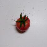 【水耕栽培】ダメダメなアロイトマトを食べてみた