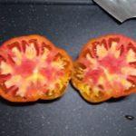 【水耕栽培】トマト あんまり調子よくないっす
